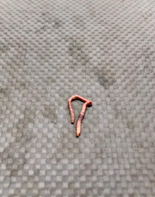 worm horzol